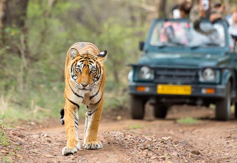 jungle safari at corbett